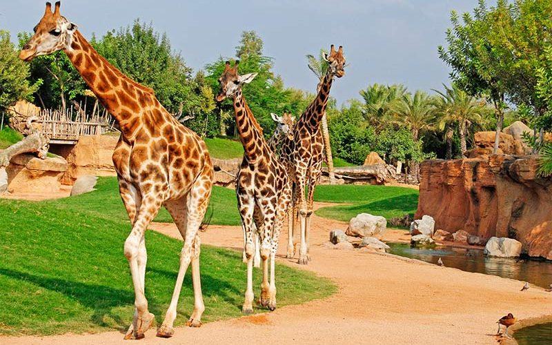 باغ وحش والنسیا