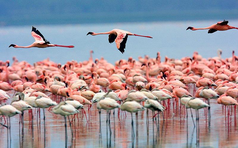 دریاچه ارومیه در گذشته