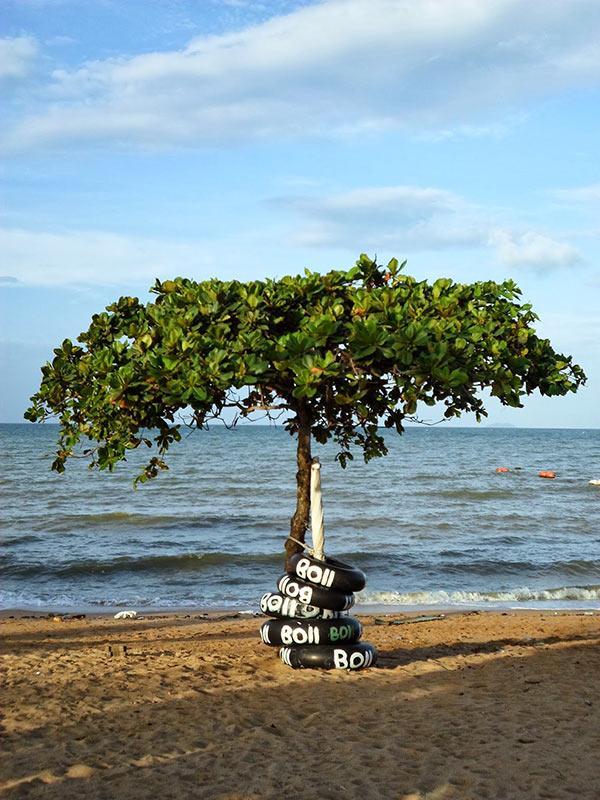 درختی در ساحل جامتین
