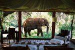 لمس حیات وحش در خاص ترین هتل های آفریقای جنوبی