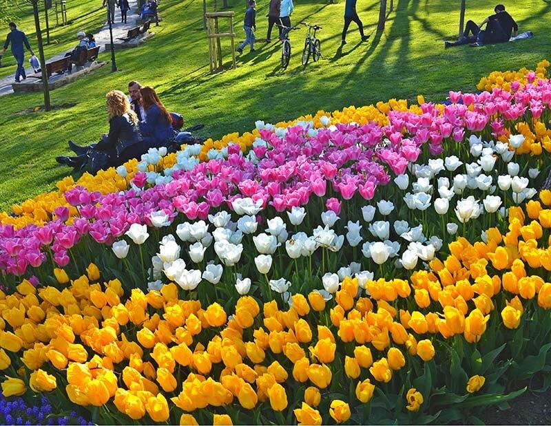 فستیوال گل لاله در استانبول
