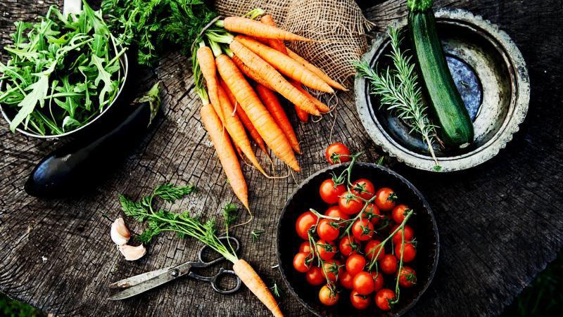 گیاهخواری | سفر