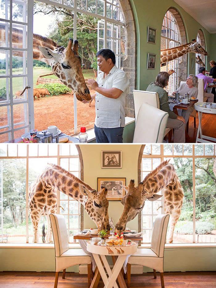 رستوران Giraffe Manor