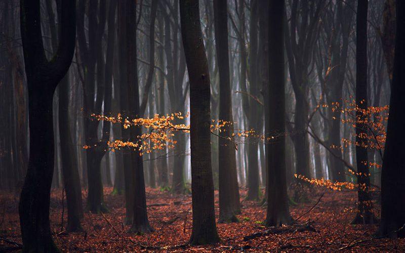 آخرین برگ های باقی مانده از پاییز