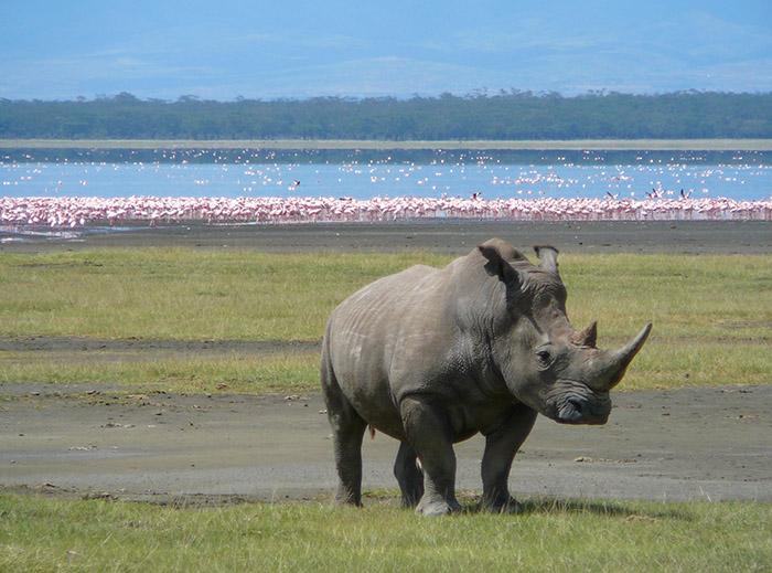 دریاچه ناکورو در کنیا