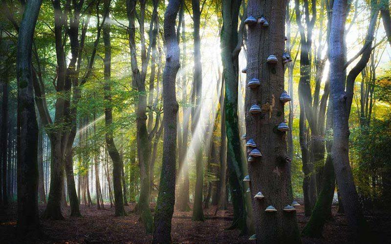 قارچ های جنگل