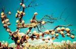 ۶ ایده ی خوب خرید سوغاتی در ترکیه