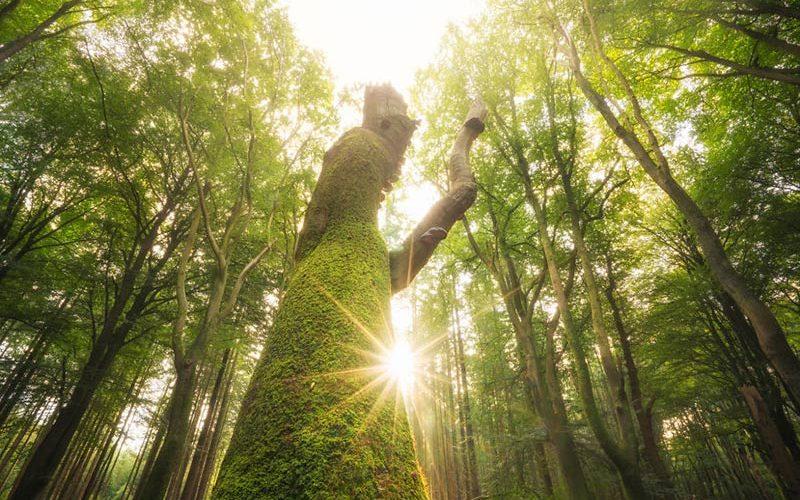 جنگل زیبا