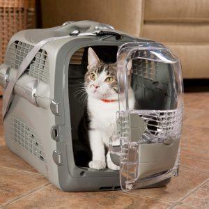 سفر هوایی گربه