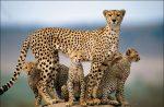 این حیوانات ایرانی در خطر انقراض هستند