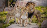 قدیمی ترین باغ وحش شبه جزیره عربستان، باغ وحش دبی