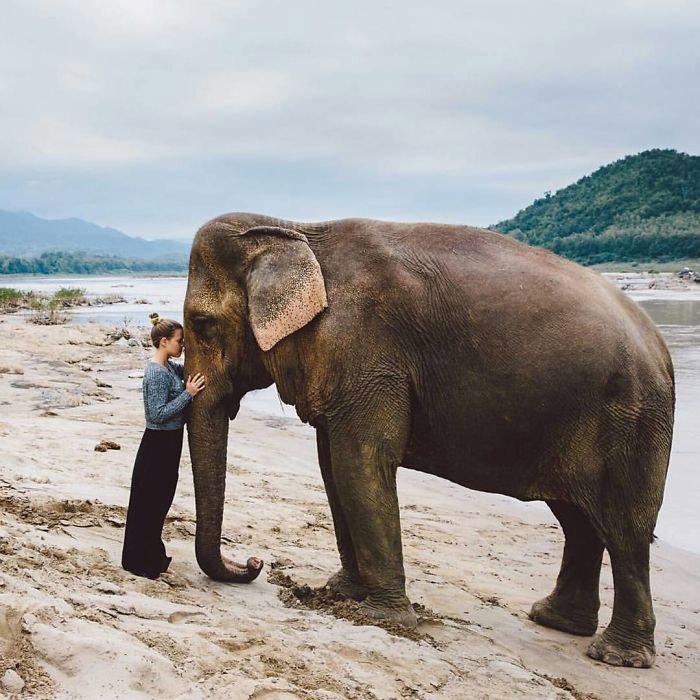 خانه فیل ها در تایلند