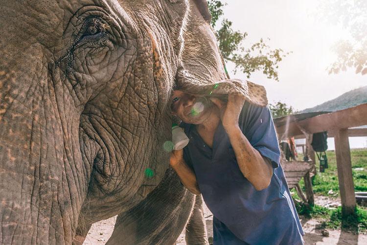 عکس یادگاری با فیل