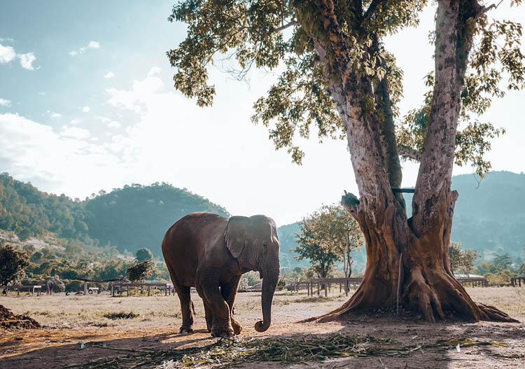 پارک طبیعی فیل ها