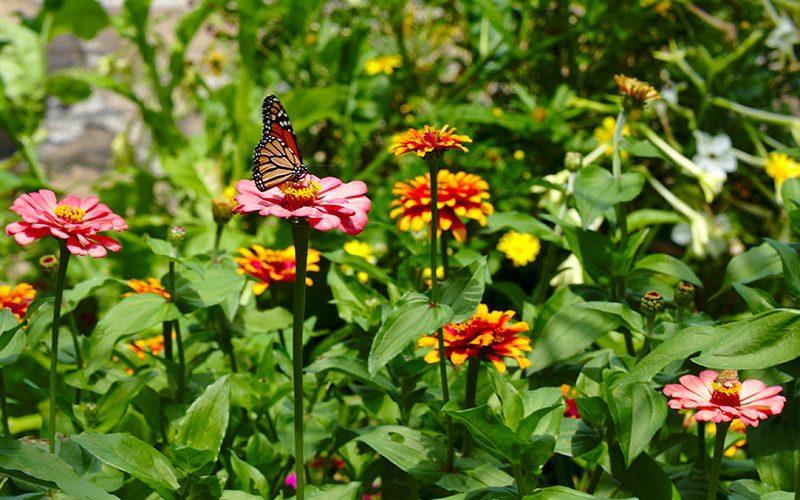 باغ پروانه
