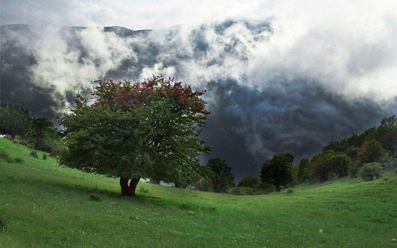 جنگل ابر در میان ابرها