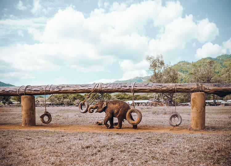 فیل کوچک در پارک فیل ها