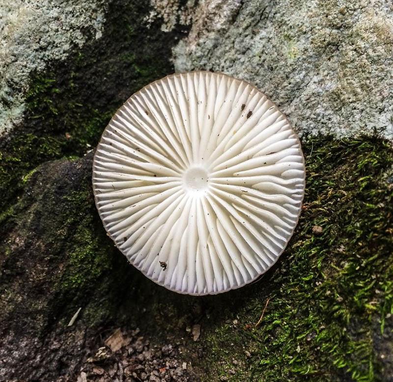 قارچ ها | میکروپیا