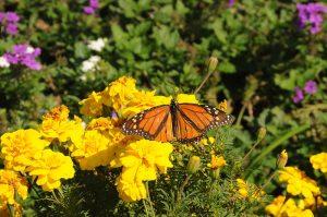 باغ های زیبای پروانه