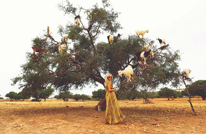 درخت آرگانیا در مراکش
