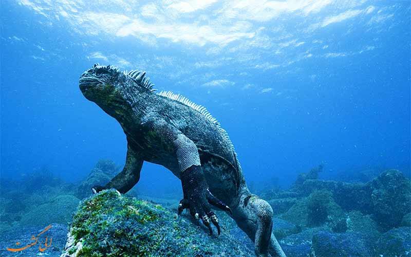 گونه های خاص جزیره