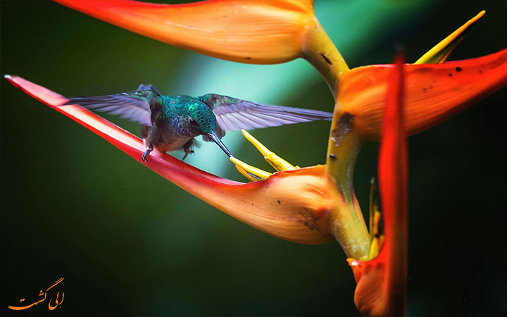 پرنده در حال غذا خوردن