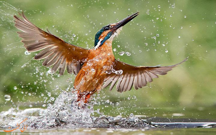 پرنده رنگارنگ