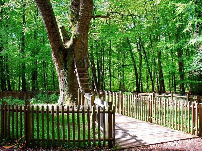 درخت آرزوها در آلمان