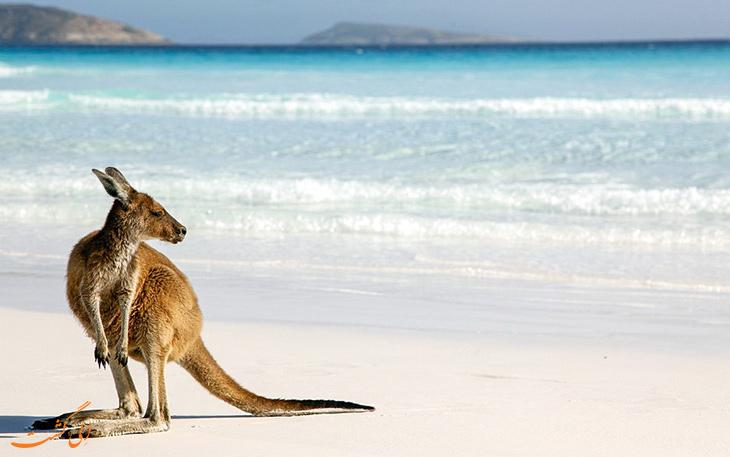 سواحل دیدنی استرالیا