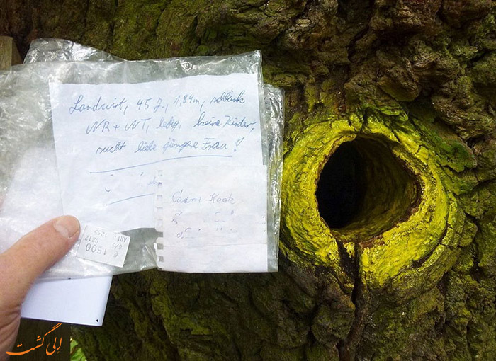 نامه به درخت آرزوها در آلمان
