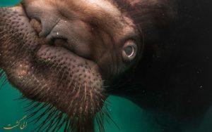 گراز دریایی