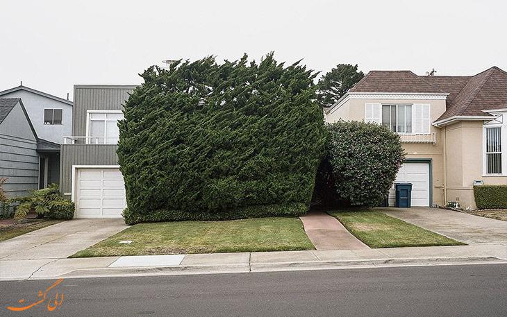 هرس درختان سان فرانسیسکو