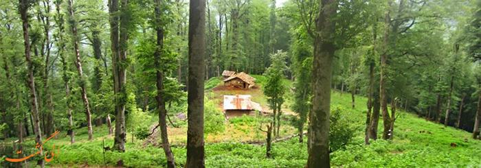 سفر به جنگل راش