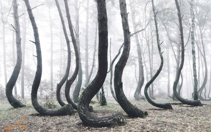 جنگل کروکت