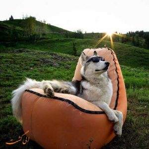 سگ های اینستاگرام معروف