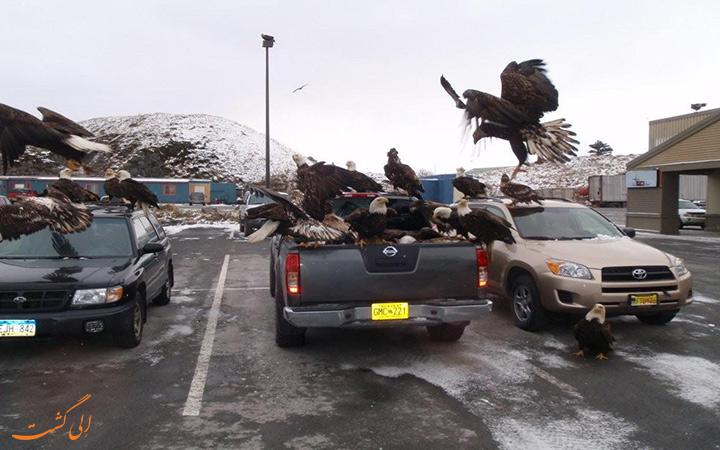 عقاب های در پشت ماشین ها