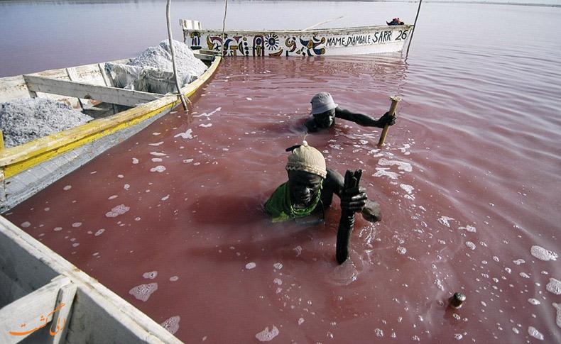 استخراج نمک از دریاچه رتبا در سنگال