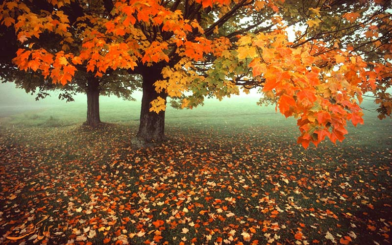 جنگلی پاییزی و رنگارنگ