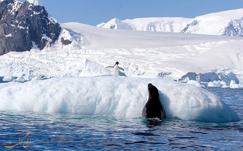 پنگوئن های قطب