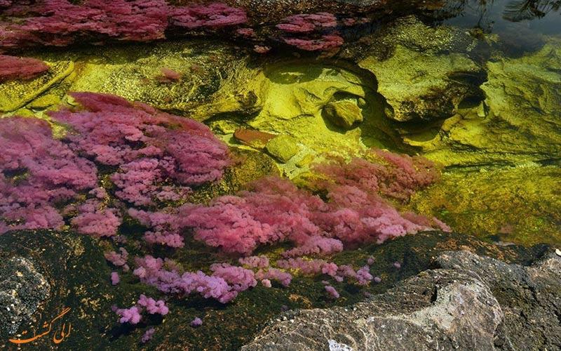 رودخانه رنگی