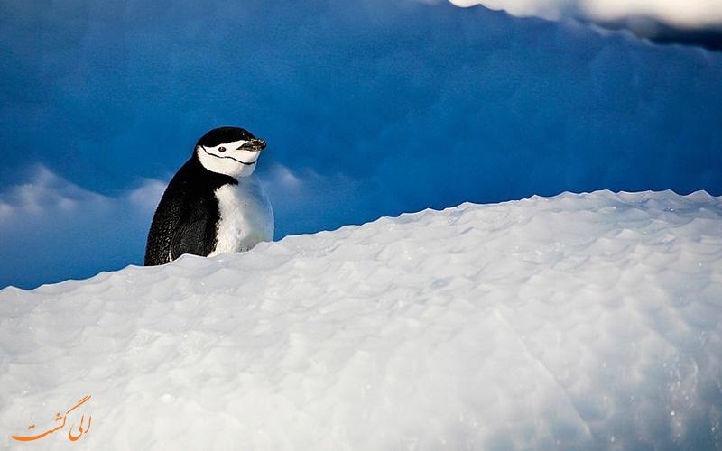 پنگوئن قطب جنوب