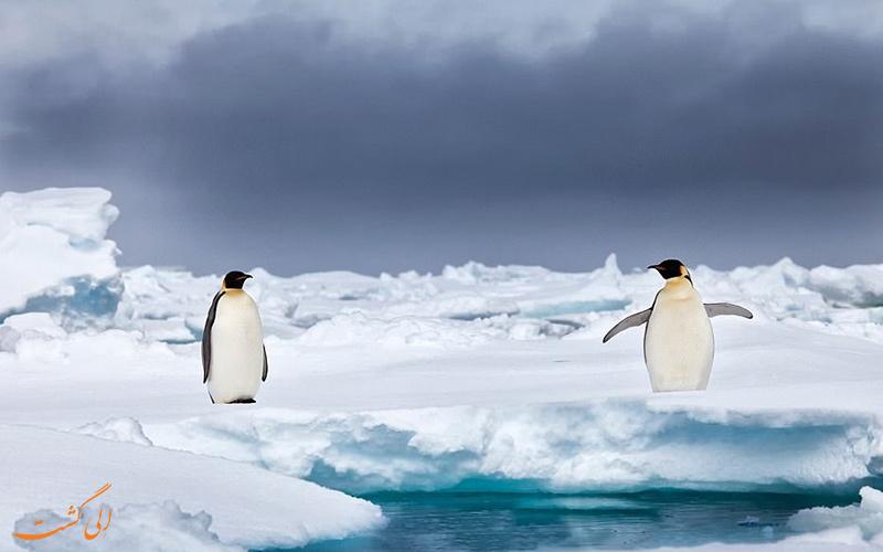 دو پنگوئن