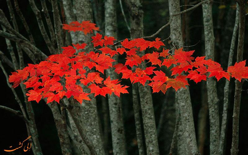 برگ های خوشرنگ