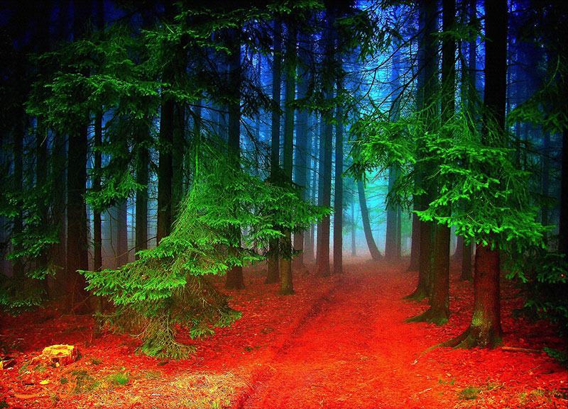 جنگل سیاه آلمان