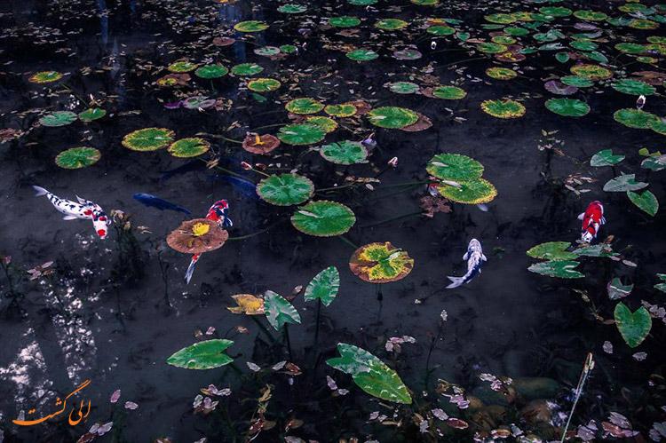 عکس های دریاچه مونت در ژاپن