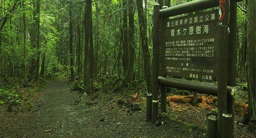 جنگل آئوکی گاهارا