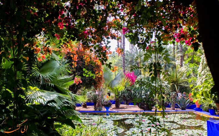 گیاهان ماژورل