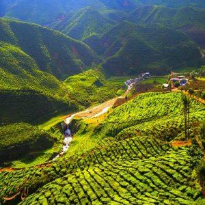 ارتفاعات کامرون مالزی