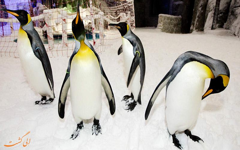 بخش پنگوئن ها در پیست اسکی دبی