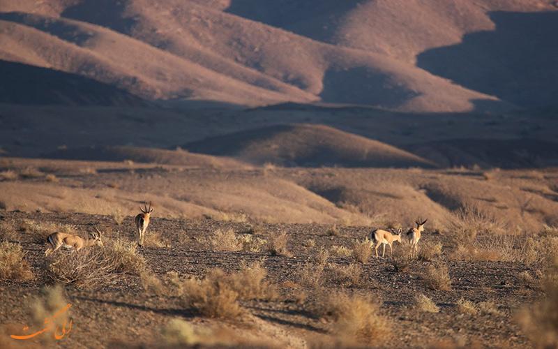 جانوران پارک ملی سیاه کوه